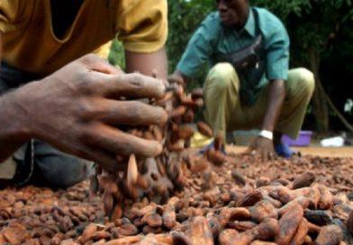 l'agro-business, un secteur privilégié des établissements de microfinance